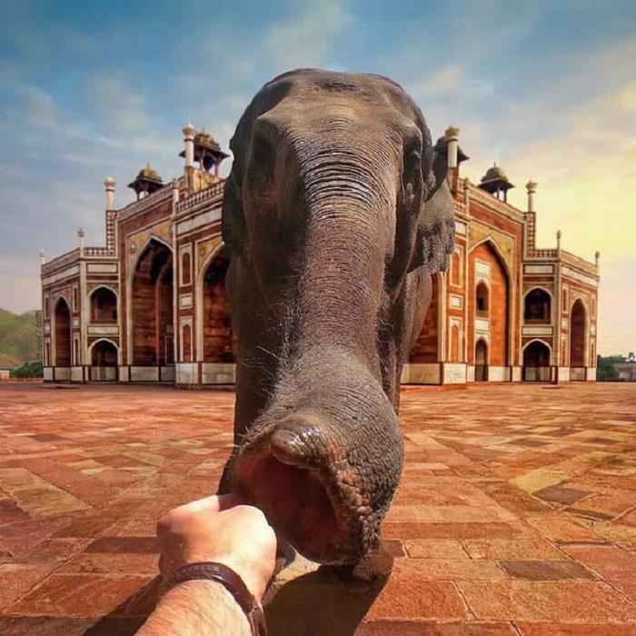 Протянуть руку и дотронуться до слона в Индии - все возможно, когда вы заглядываете в мир Джанса.