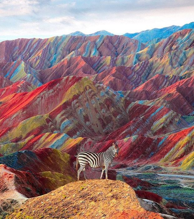 Яркие краски дополняющие «полосатую» жизнь.
