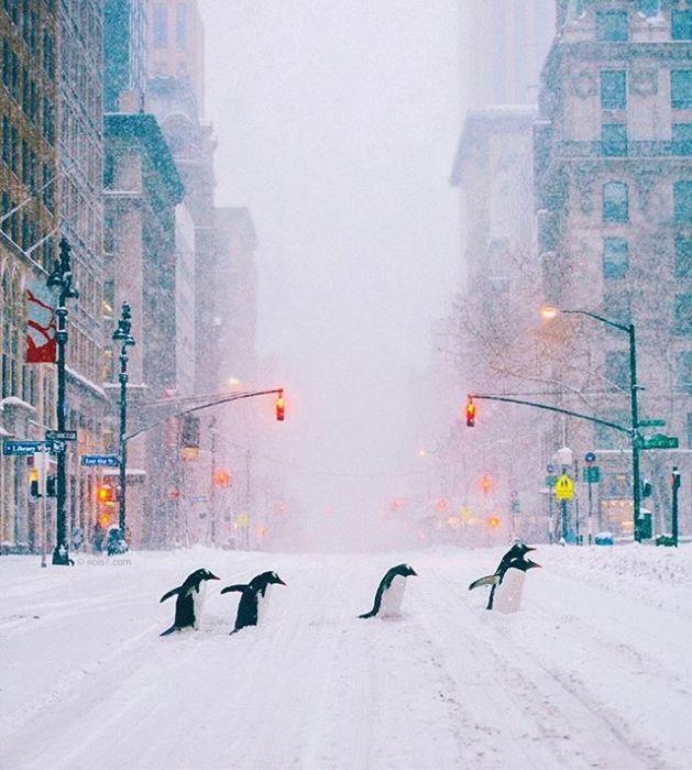 Необычные городские жители, переходящие на зеленый светофор.