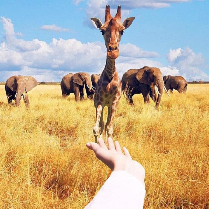 Тема животных проходит «красной нитью» через все работы фотографа.