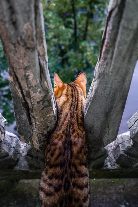 Любопытный котенок с оригинальной шерстью. Автор фотографии: Камила Земе( Kamile Zemaite ).