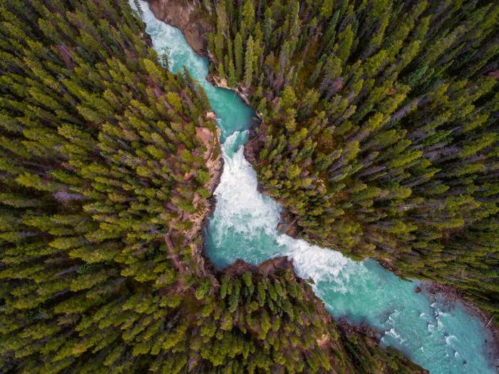 Река разбивает на две половины лес. Автор фотографии: Дейл Джонсон (Dale Johnson).