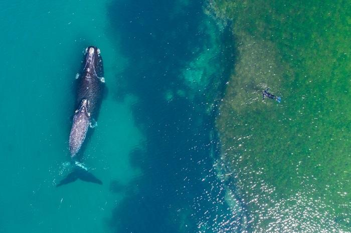 Знакомство морского гиганта с  человеком. Автор фотографии: DroneFilmsProject.