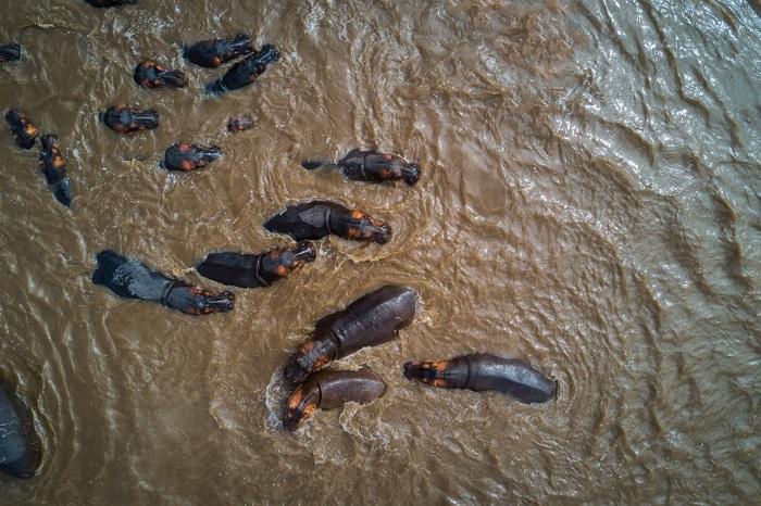 Водные процедуры принимают все от мала до велика на территории Национального парка Серенгети. Автор фотографии: yannick68.