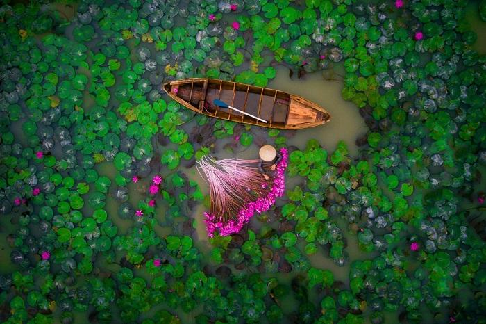 Сбор водяной лилии в дельте реки Меконга во Вьетнаме. Автор фотографии: Helios1412.