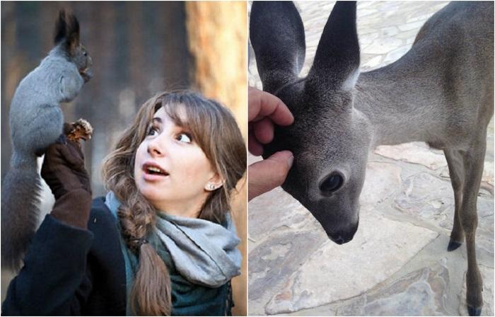 Фотографии  людей, которые неожиданно для себя столкнулись с обитателями дикой природы.