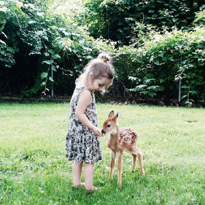 Крошечная принцесса кормит с ладошки своего нового друга олененка.