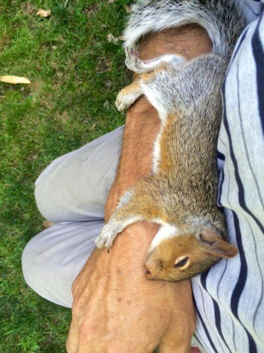 Бельчонок, сладко заснувший на руке своего нового друга.