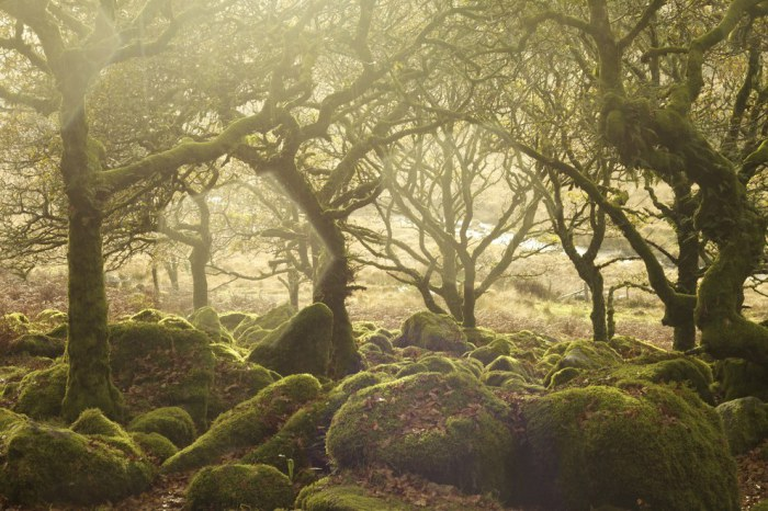 Холмистая болотистая местность в графстве Девон в Юго-Западной Англии, а также одноимённый национальный парк Великобритании.