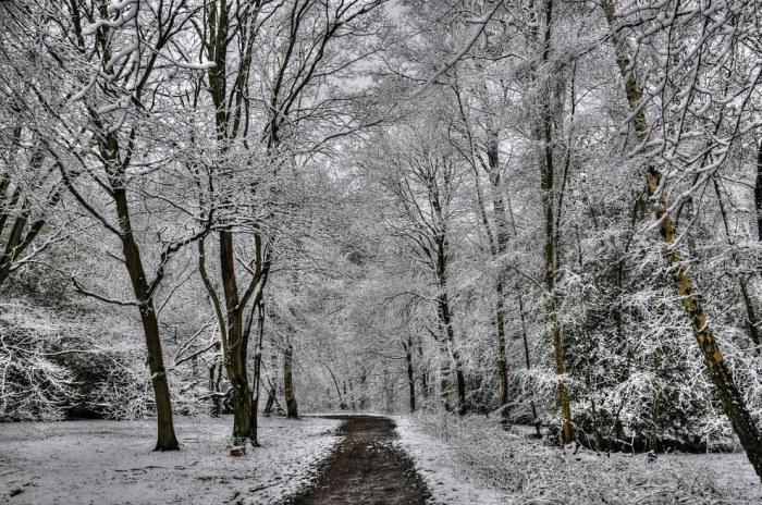 Сказочные деревья сразу после весеннего снегопада.