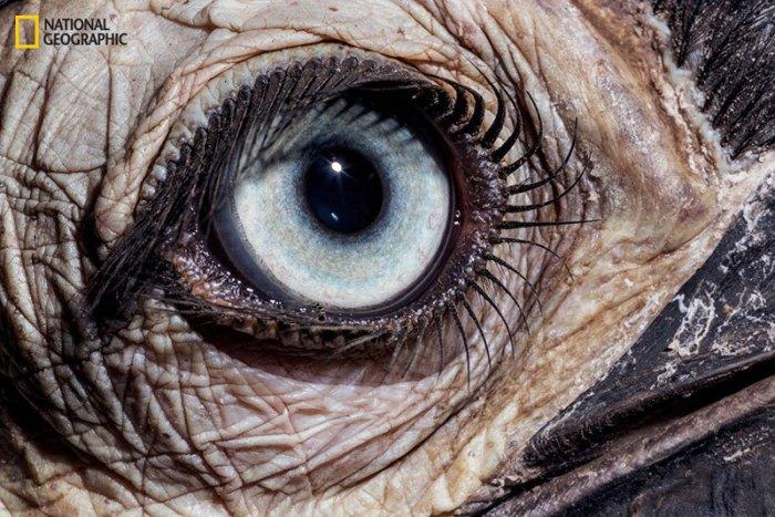 Вокруг глаз у некоторых видов птиц в семействе птиц-носорогов имеются голые участки кожи, а на верхнем веке толстые, длинные ресницы.