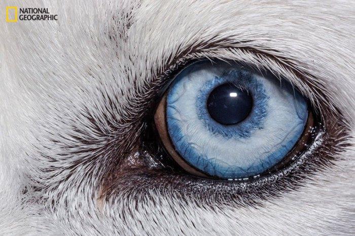 Глаз домашнего «животного-компаньона».