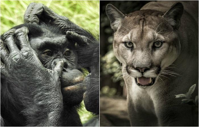 Увлекательные факты о животном мире, рассказанные экскурсоводом зоопарка и аквариума Колумбуса в штате Огайо (США).