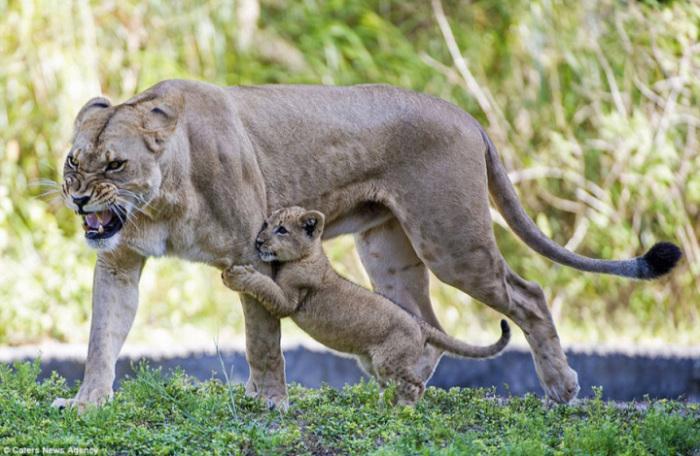 Мама всегда защитит.