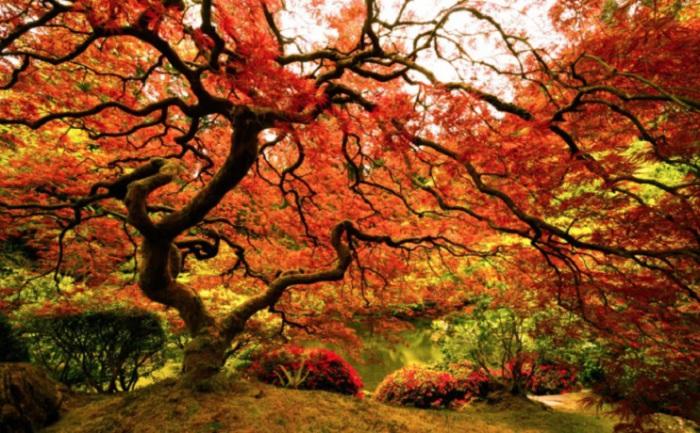 Осень в Портленде, США.