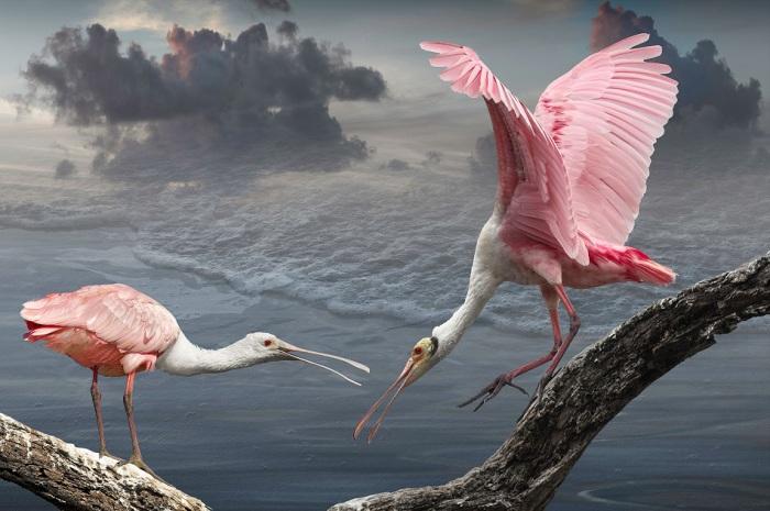 Крупная длинноногая птица с длиной шеей, коренастым телом, длинными и тонкими лапами.