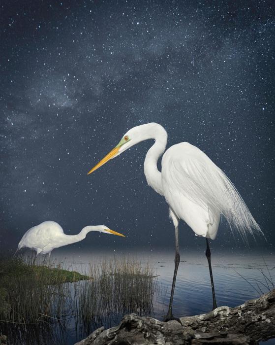 Птица удивительно красивая и грациозная.