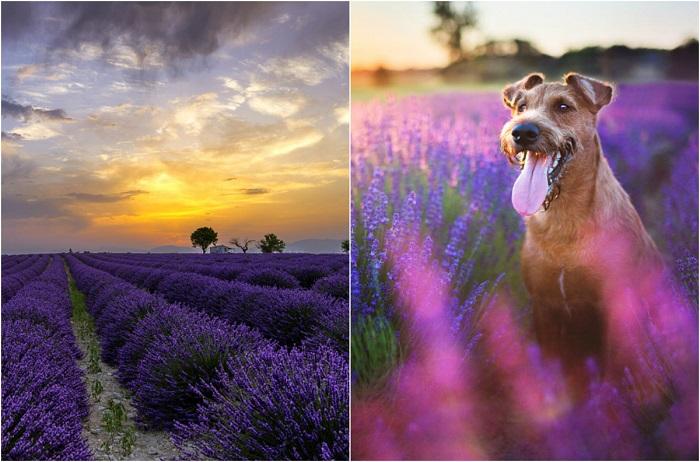 Фиолетовый цвет, символизирующий мудрость и мистику.