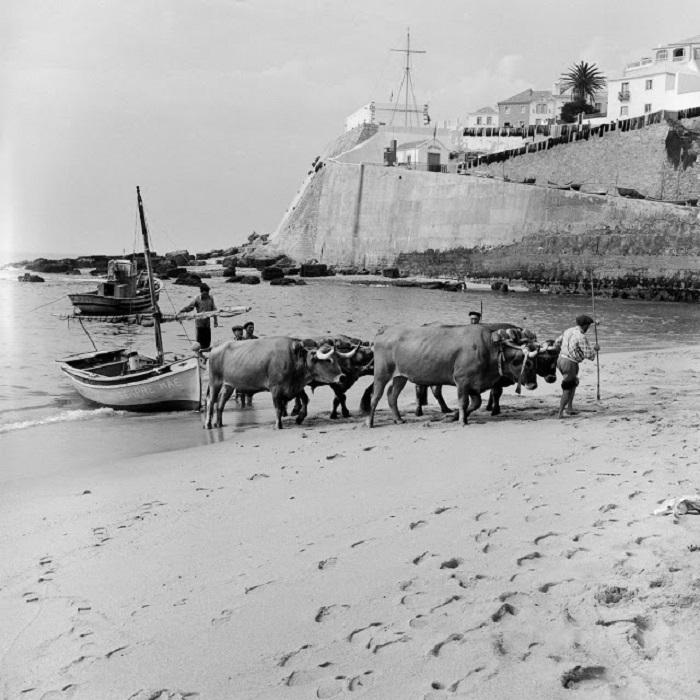 20 чёрно-белых ретро фотографий из жизни португальских рыбаков