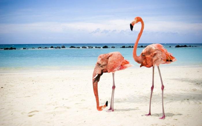 Гибрид фламинго и слона.