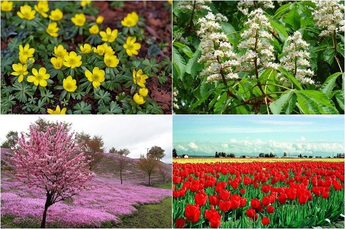 Весна - пробуждение жизни.