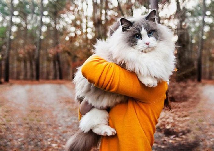 Самый мягкий и тёплый котик.
