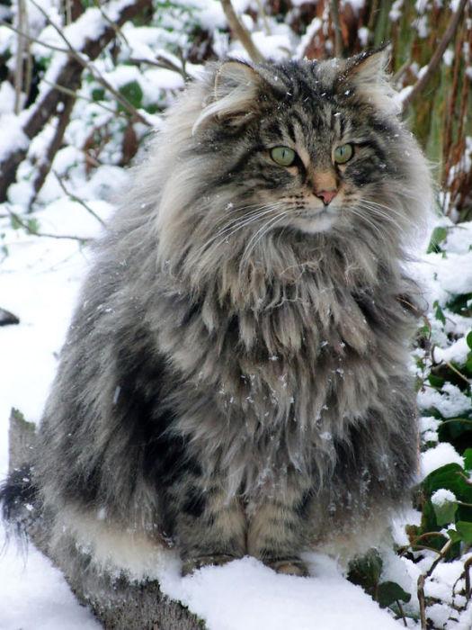 С такой шубейкой никакой снег не страшен.