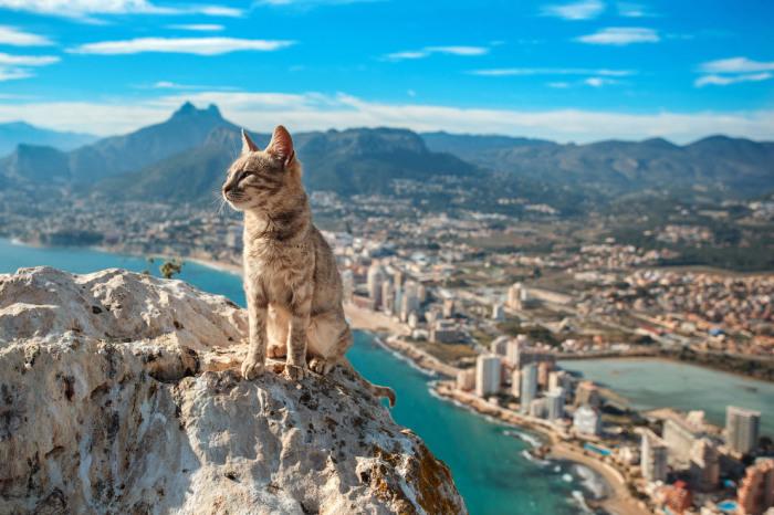 Кот в испанском городе Кальпе. Фотограф Aleksandr Osipov.
