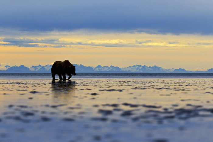 Национальный парк и заповедник Озеро Кларк, Аляска. Фотограф Andy Skillen.