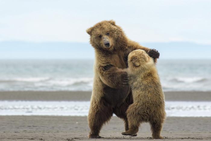 Обучение танцам, Аляска. Фотограф Karie Lefebvre.