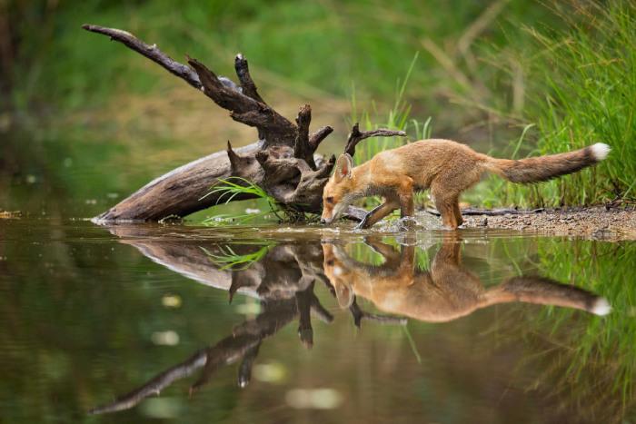 Охотник-рыболов. Фотограф Milan Zygmunt.