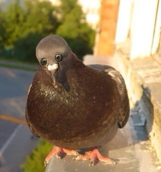 Расположение глаз у птицы не сбоку, а спереди.