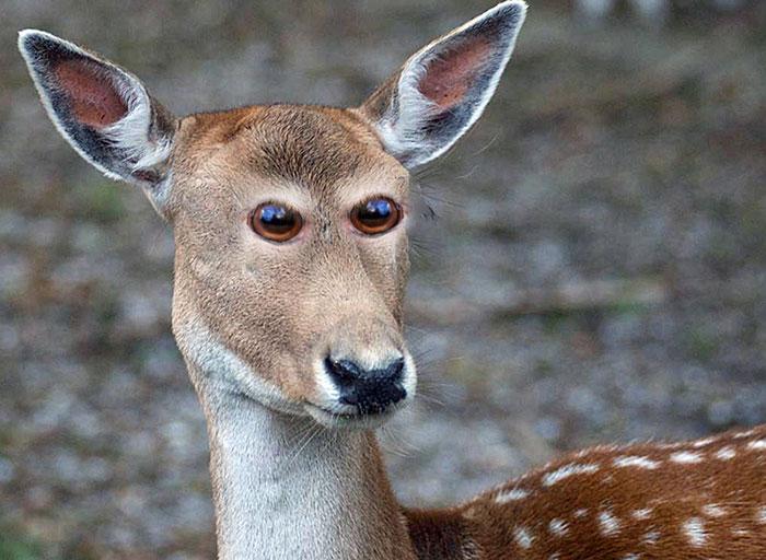 Лесное животное глядит на тебя перепуганным взглядом.