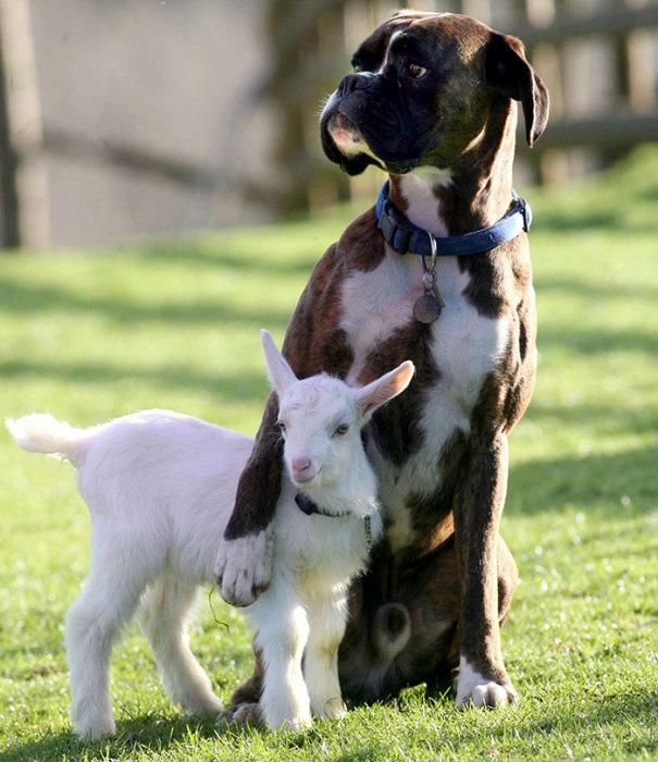 «Не бойся, парень, ты под моей надежной защитой!»
