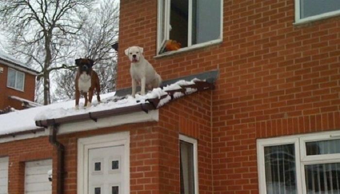 «Когда прибежал человек и сказал, что наши собаки сидят на крыше, мы подумали – это шутка. Оказалось нет…»