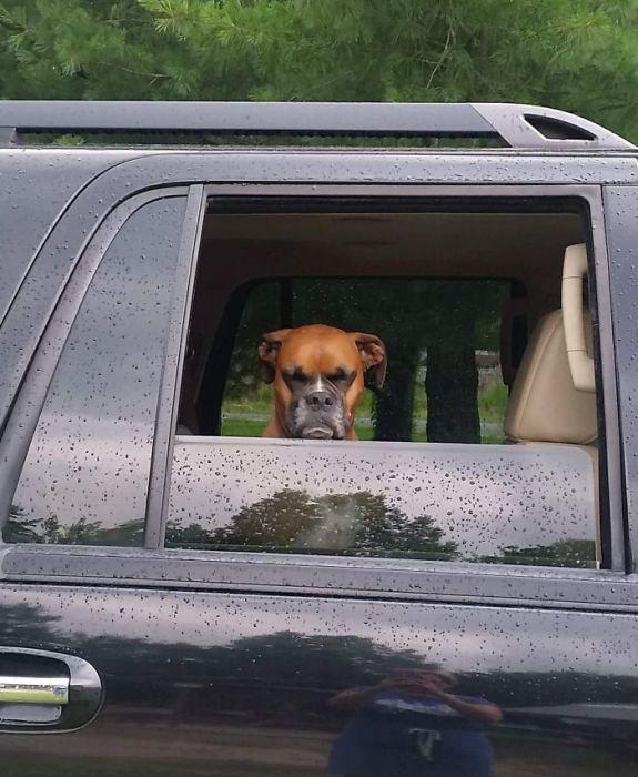 «Просто собака моего друга недовольна тем, что мы так рано уезжаем из парка…»