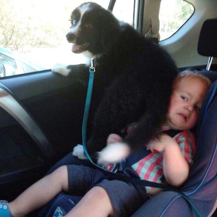 Снимите этого щенка с меня!