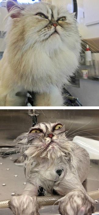 Месть котейки будет жестока.
