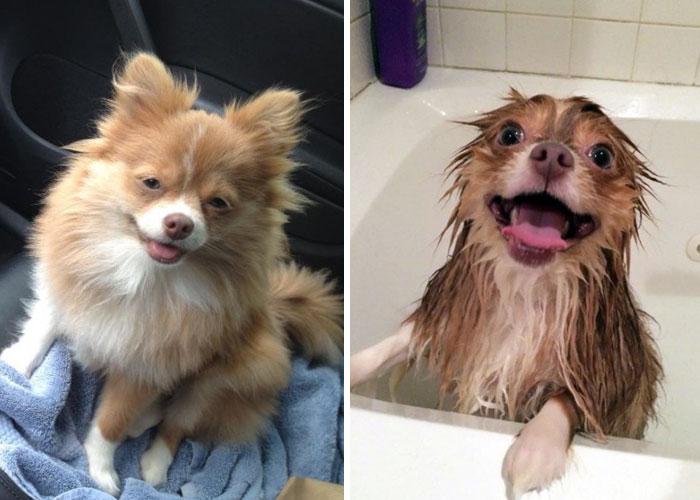 Собаки тоже иногда бояться воды.