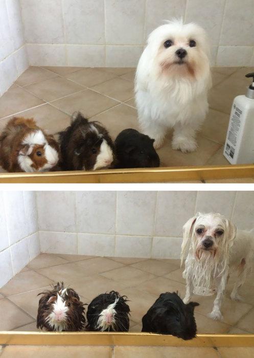 Почему мы в ванной и зачем тебе шампунь для животных?