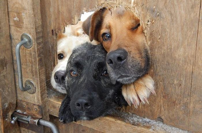 Собачье любопытство.