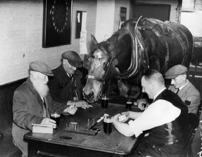 Лошадь по кличке Сэм на протяжении нескольких лет со своим хозяином посещала бар, где играли в домино.