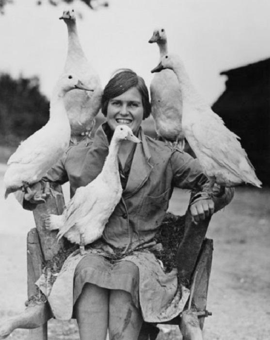Девушка и гуси - великолепная группа.