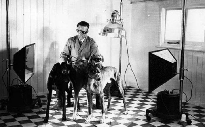 Фото охотничьих собак в солнцезащитных очках.