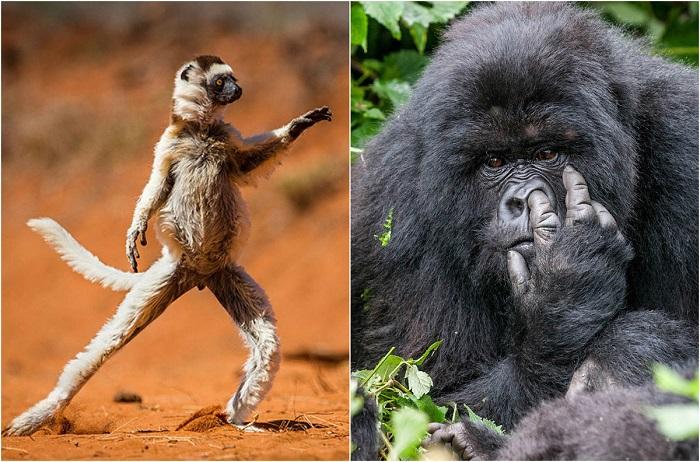 Победители фотоконкурса omedy Wildlife Photography Awards.