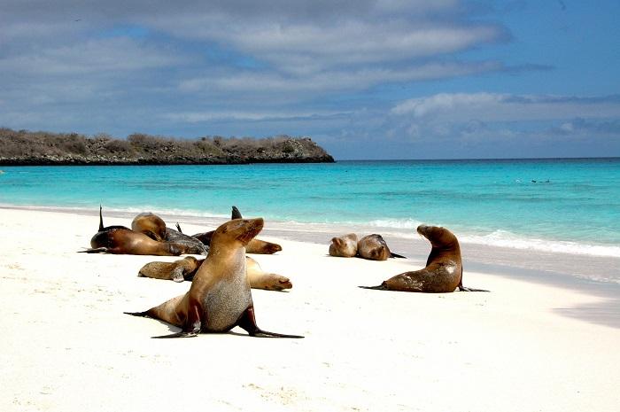 Острова расположились на востоке экваториальной части Тихого океана, почти в 1000 км к западу от материкового Эквадора.