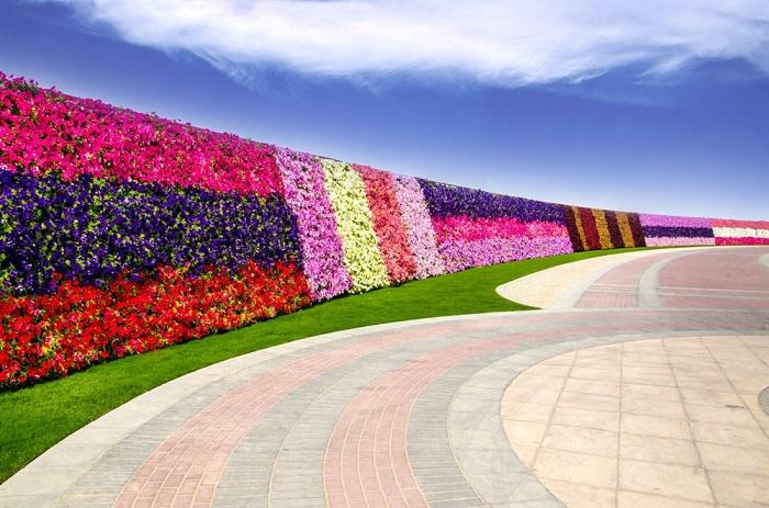 Цветочная стена высотой 3 метра и протяженностью 800 метров.