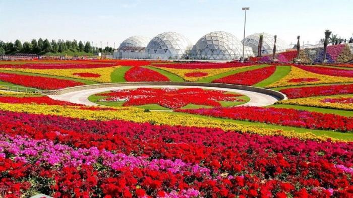 Разнообразие форм и расцветок поражат даже самых придирчивых садоводов.