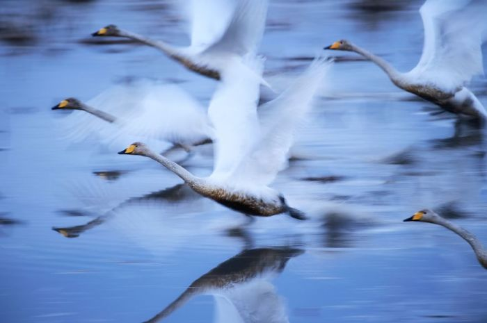 Снимок «Выжить» фотографа Хироми Кано (Hiromi Kano) занял 2-е место в номинации «Природа».