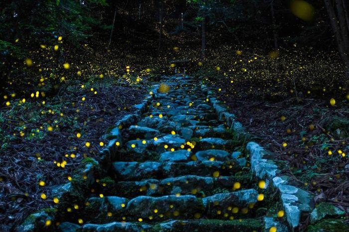 Поощрительный приз в номинации «Природа» завоевал снимок «Лес фей» японского фотографа Ютака Такафуджи (Yutaka Takafuji).